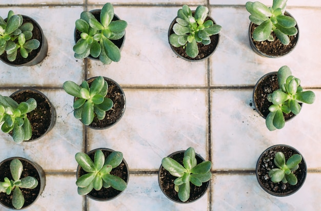 Gardening, planting and flora concept - close up of plant in pots at greenhouse. top view with copy space