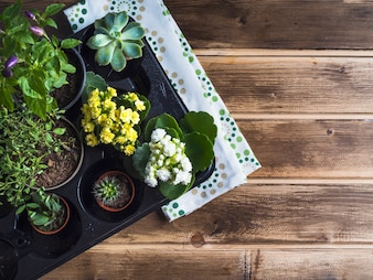 Gardening plants in plastic crate with napkin on wooden table