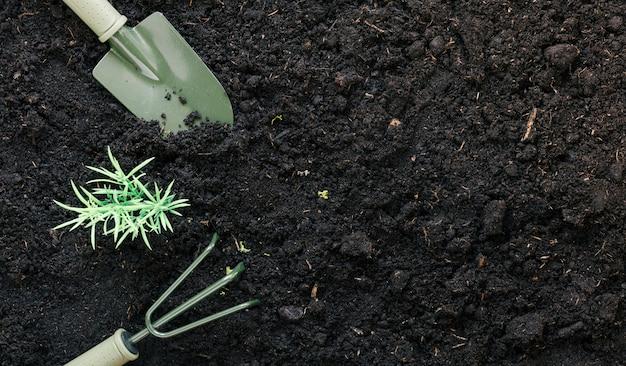 Gardening shovel and gardening rake on black dirt with plant