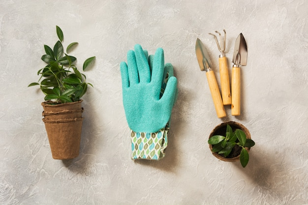 Gardening spring concept with green leaves and tools. flat lay.