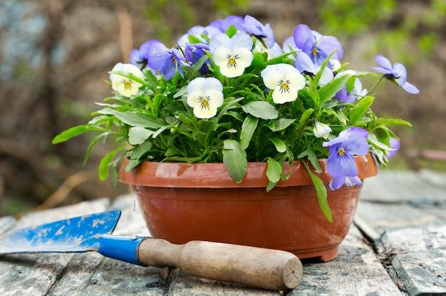 春の庭の園芸工具と色とりどりのパンジーの花