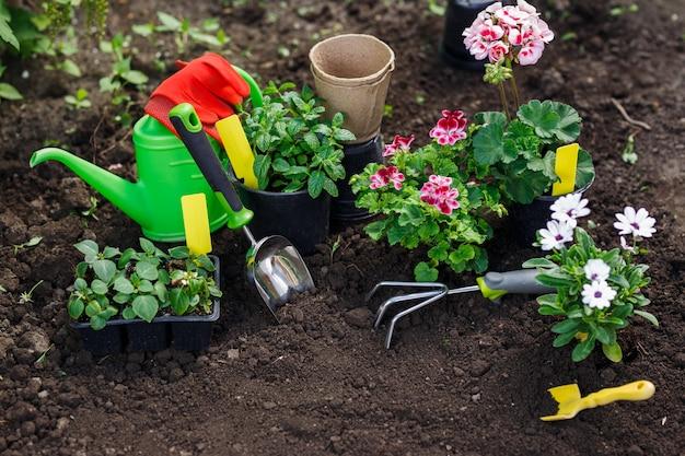 뒤뜰에 심기 위해 냄비에 원예 도구와 꽃.