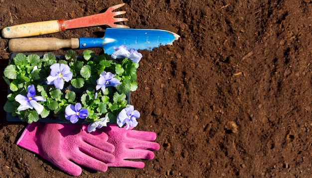 원예 도구 및 토양 배경에 꽃, 평면도