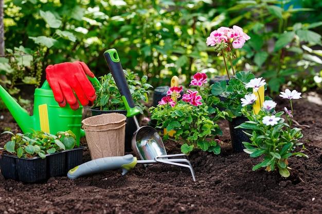 Садовые инструменты и растения на фоне почвы. концепция весенних садовых работ.