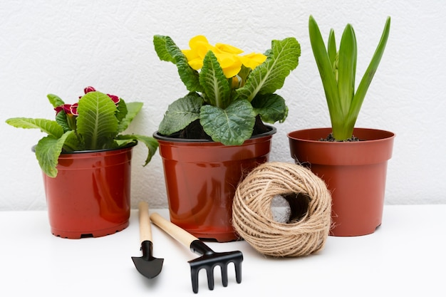 Gardening tools beside plant