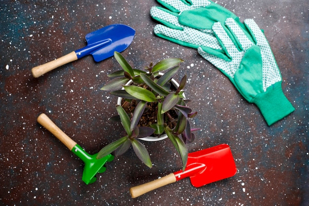 Gardening tools on dark background with house plant and gloves, top view