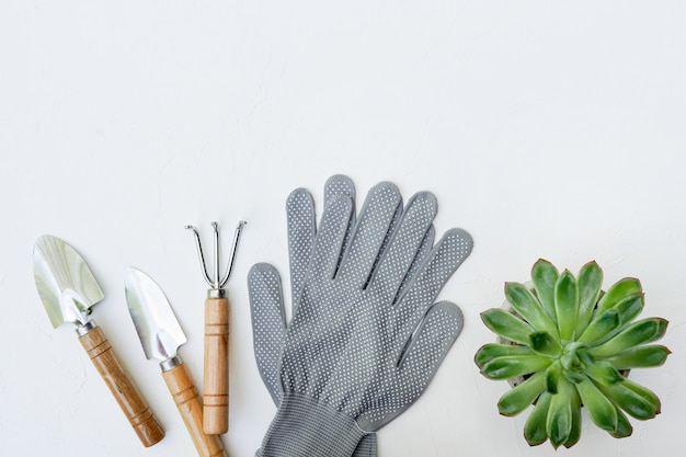 Gardening tools and flower succulent on white wall