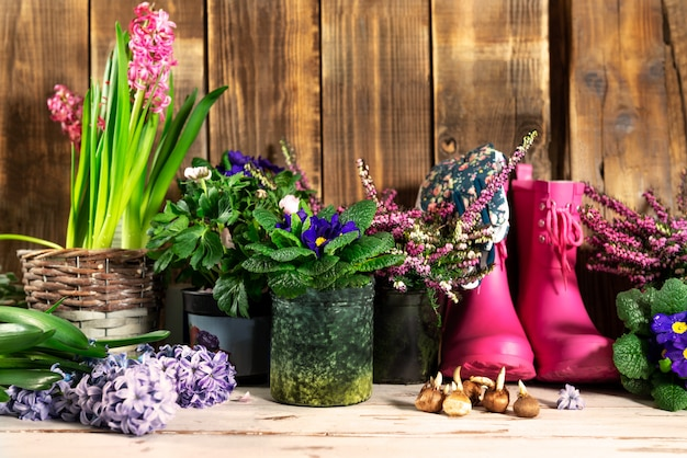Gardening tools and flowers in the pots