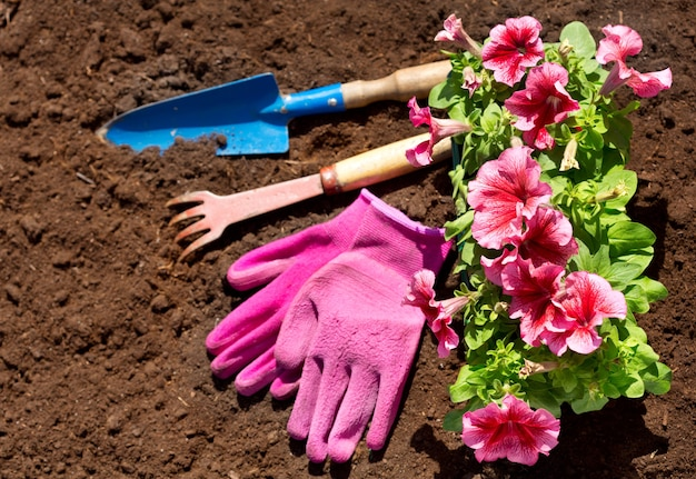 Gardening tools and flowers on soil background, top view
