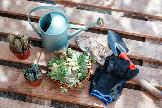 가정 정원에서 다육 식물과 선인장을 다시 화분에 옮기기 위한 원예 도구