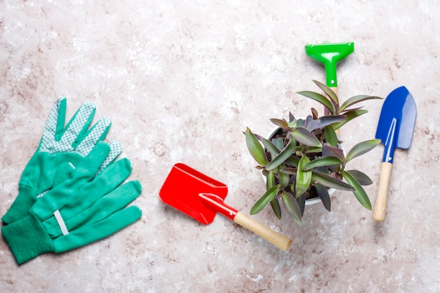 Gardening tools on light table with house plant and gloves