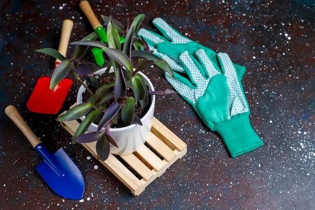 Садовые инструменты на темном фоне с комнатным растением и перчатки, вид сверху