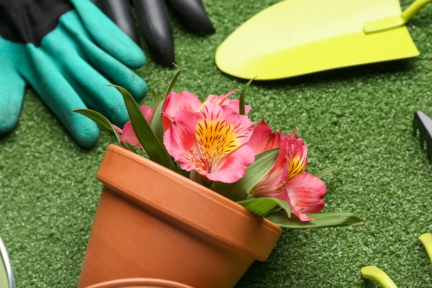 Gardening tools and pot with blooming plant on color