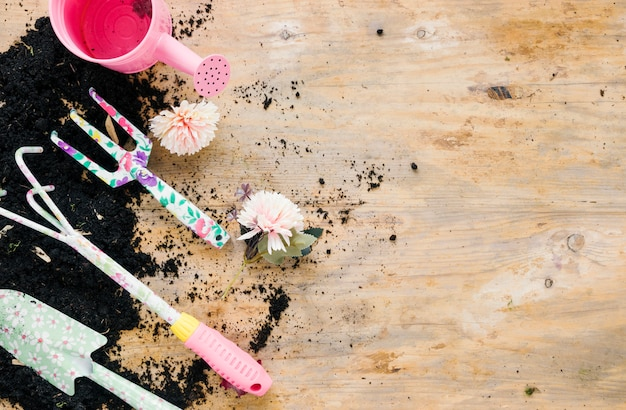Gardening tools with pink watering can and chrysanthemum flower; blank soil against wooden backdrop