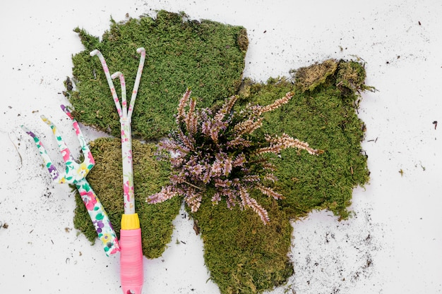 Gardening tools with turf over white backdrop