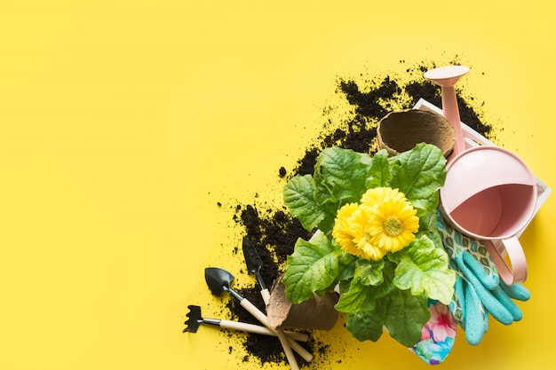 Gardening with gerbera, tolls and flowers plant in box on yellow.