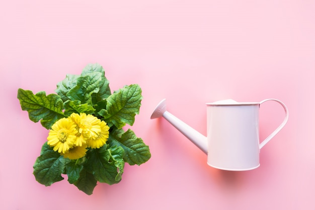 Gardening with watering can and gerbera flowers on pink. top view. copy space.