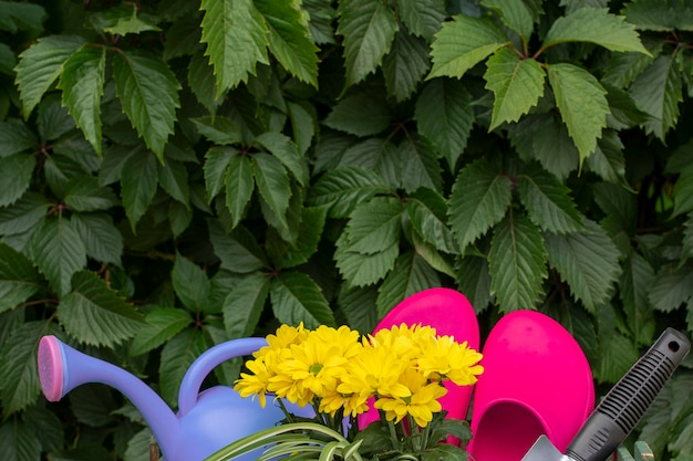 Gardening. work in the garden. tools, watering can and flower in a pot on a background of green leaves.