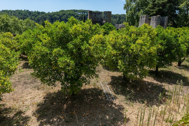 ポルトガルのトマールの日光と青い空の下でテンプル騎士団の城の庭園