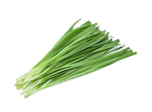 Garlic chives isolated