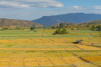 Garlic field with small hut in Pai, Thailand