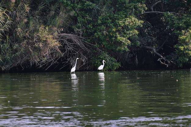 Garzas en laguna