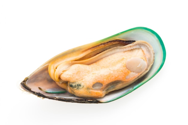 Gastronomy food mussel sea group