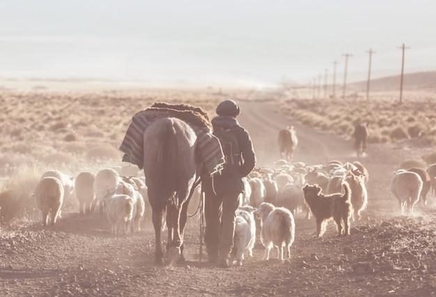 アルゼンチン、パタゴニア山脈のガウチョとヤギの群れ Premium写真