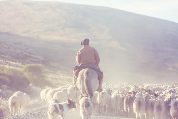 アルゼンチン、パタゴニア山脈のガウチョとヤギの群れ