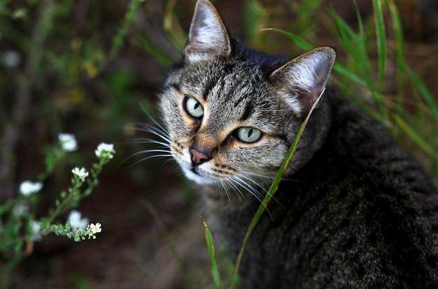 Взгляд красивой кошки на фоне полевых цветов