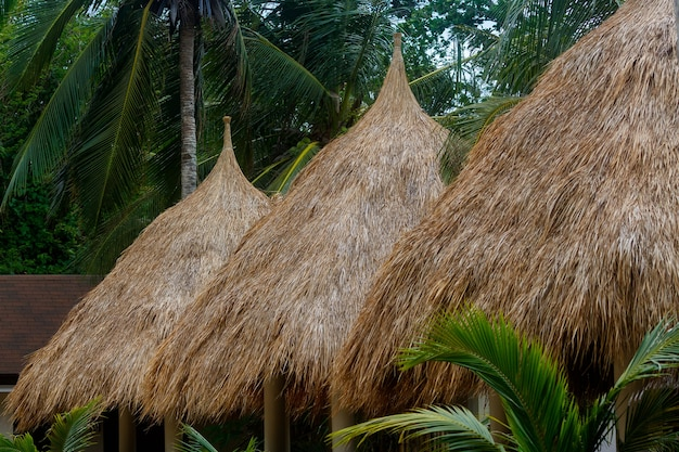 Gazebo tents with strawing roof for tourists on beach among the coconut trees