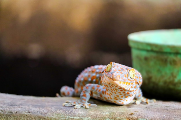 Gecko fell from the wall into water tank and climbed on edge of the basin