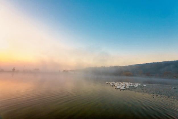 ガチョウは霧に覆われた池から離れて飛んでいます。