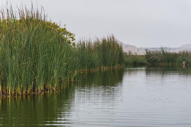 Лагуна генезис в пантанос-де-вилья, большая лагуна в окружении растений тотора в чоррильос, лима, перу