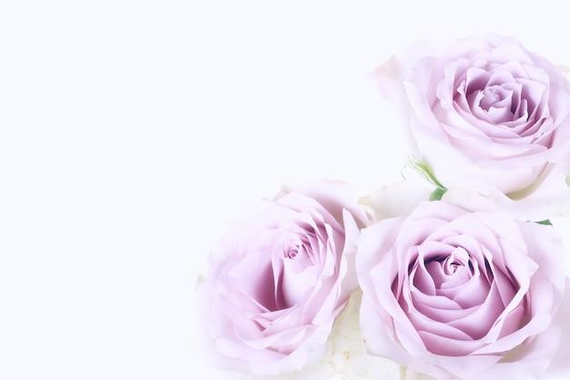 Нежный фон из розовых роз