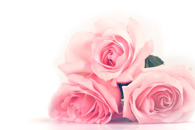 Gentle background of pink roses