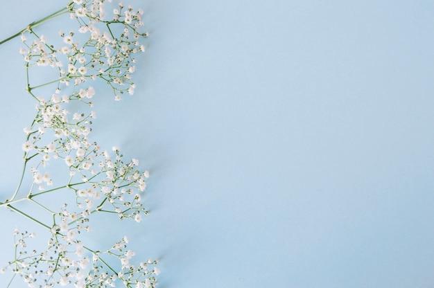 Ramoscelli floreali delicati su blu