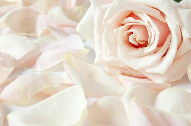 Нежная открытка с розой и лепестками