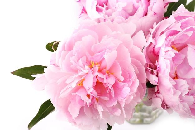 흰색 바탕에 부드럽게 분홍색 모란 꽃