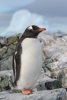 南極の雪の上のジェンツーペンギン Premium写真