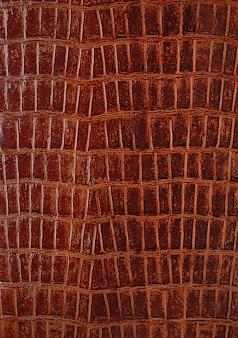 Genuine crocodile leather closeup background