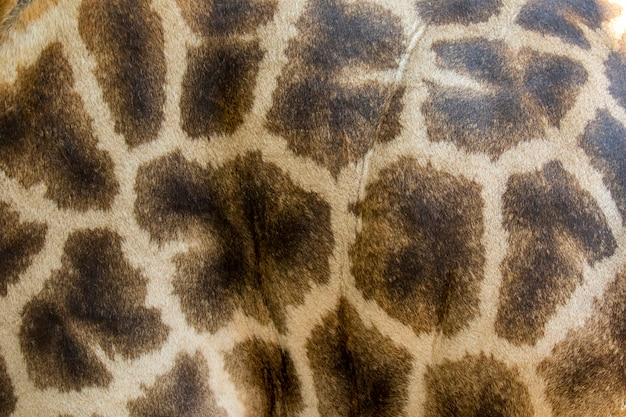 Genuine leather skin of giraffe with light and dark brown spots.