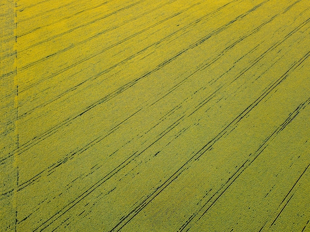 Geometric forms of agricultural fields with different crops in green color a bird's eye view from the drone. texture of plant background. top view