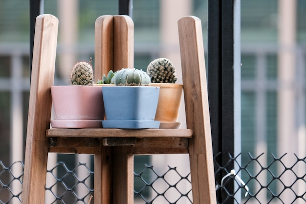 Geometric glass florarium vase with succulent plants and small cacti in a pots on wooden rack