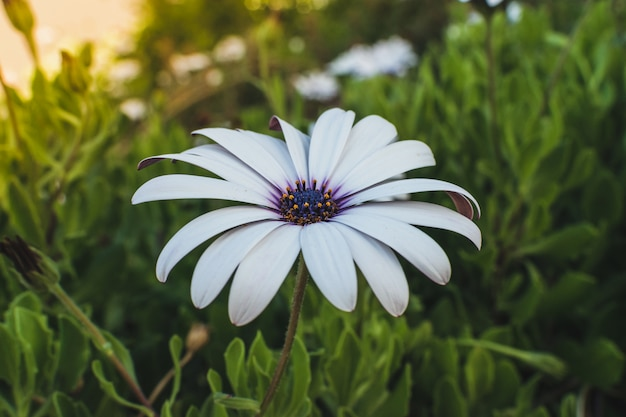 Gerbera daisy flower. outdoors women summer party concept