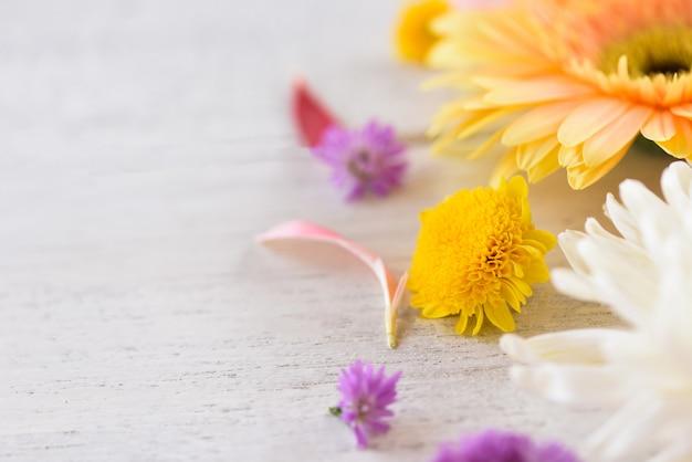 Gerbera flower and marguerite purple frame composition