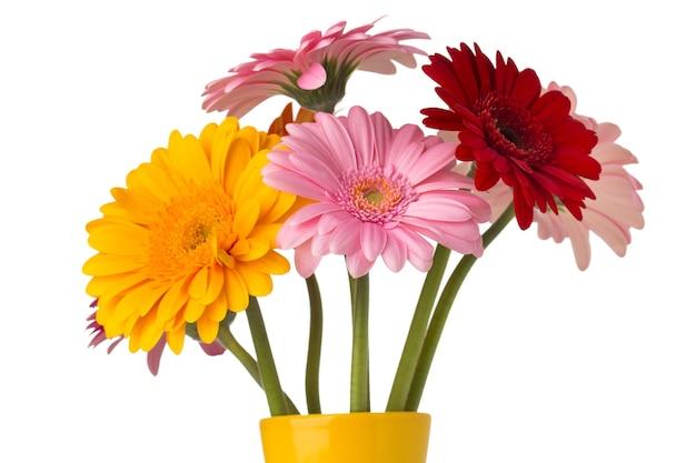 꽃병, 격리 된 흰색 배경에 gerbera 꽃.