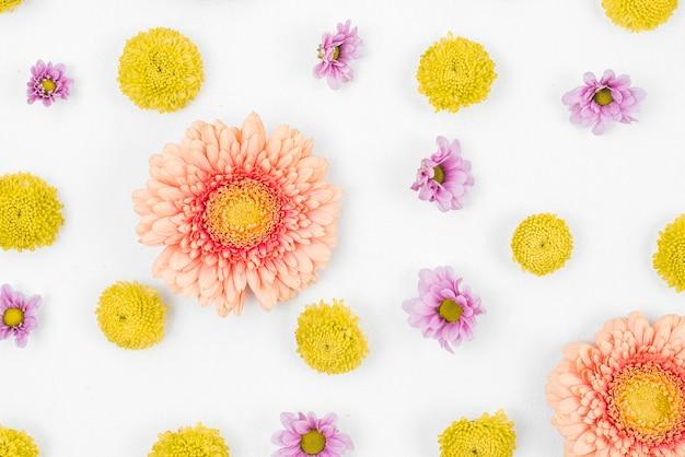 白い背景にガーベラの花のパターン