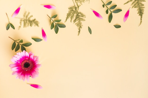 Цветок герберы с лепестками и ветвями растений на столе