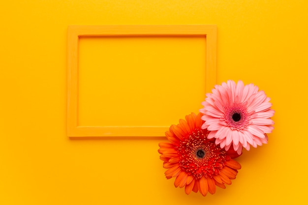 Gerbera flowers on a copy space empty frame